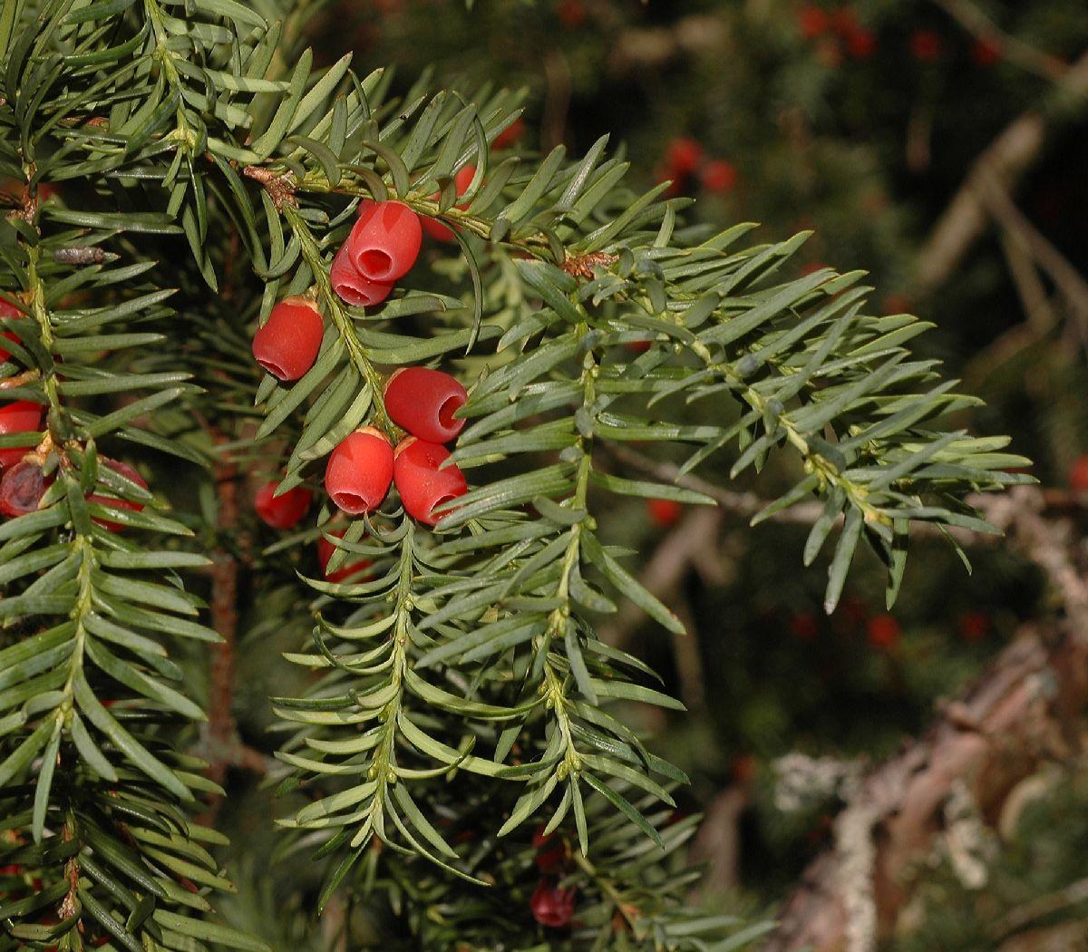 Plantsnap – Identify Plants, Trees, Mushrooms With An App